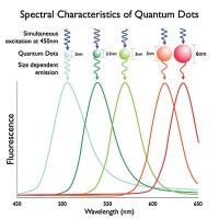 Espectros característicos de los puntos cuánticos (fluorescencia)